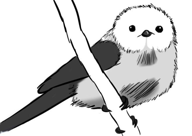 659x468 Simple, Monochromatic Japanese Long Tailed Tit Would Appreciate