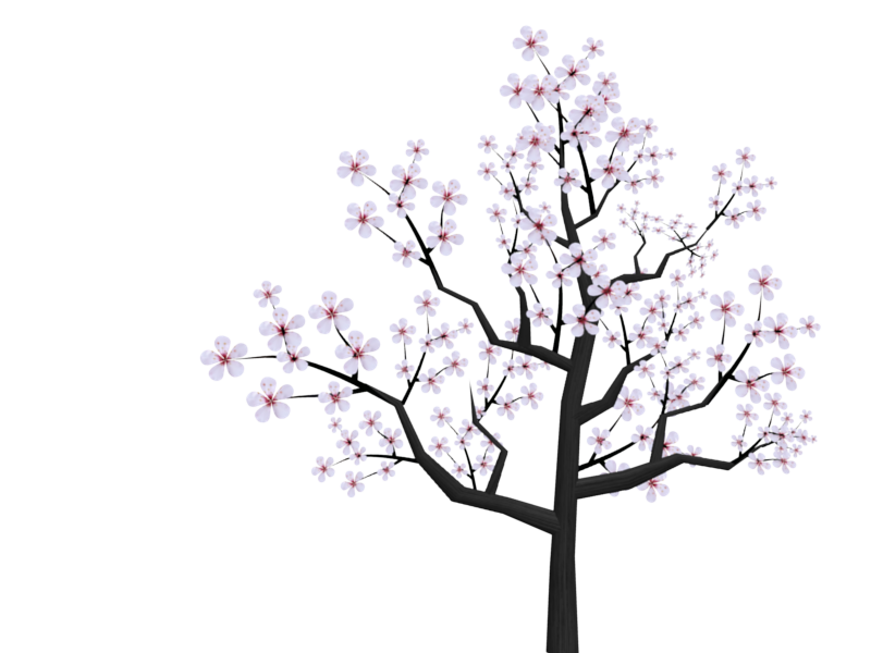 800x600 Collection Of Free Japanese Drawing Cherry Blossom Download On Ui Ex