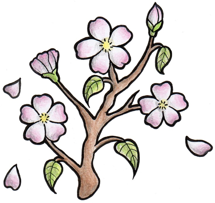 736x696 Japanese Cherry Blossom Drawing
