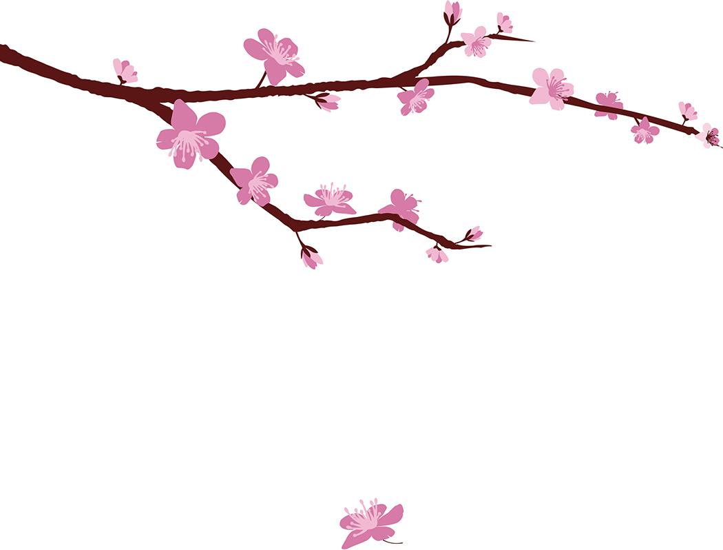 1050x798 Japanese Sakura Flower Drawing