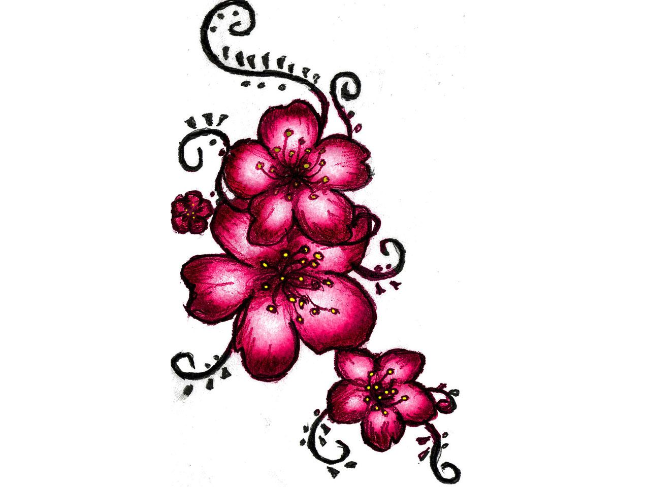 1280x960 Pics For Gt Japanese Cherry Blossom Drawing Tattoo A Good Thread