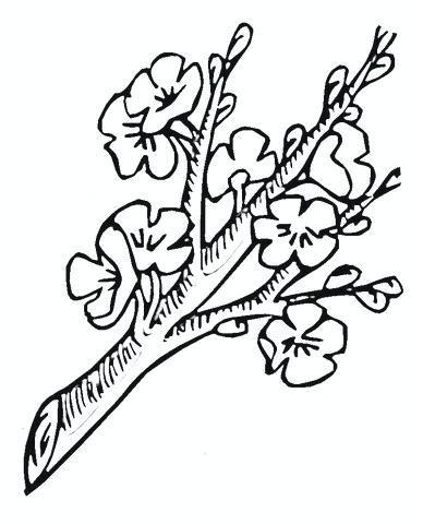 388x480 cherry blossom tree sketch cherry blossom mural drawing cherry