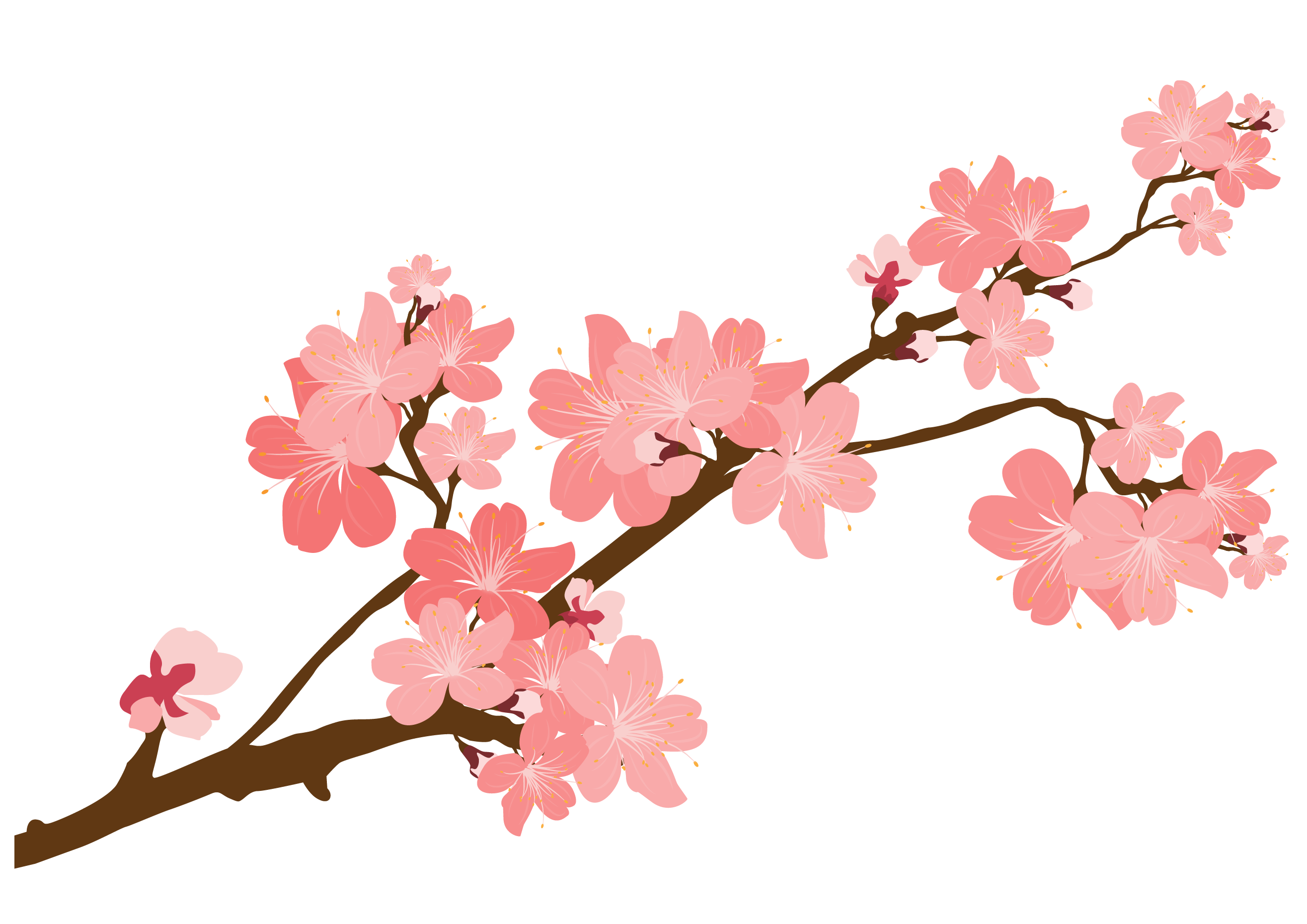 Japanese Cherry Blossom Flower Drawing