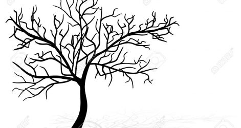 471x250 Drawing A Japanese Cherry Blossom Tree Images Black And White