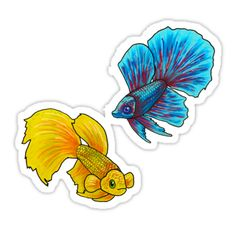 Japanese Fighting Fish Drawing