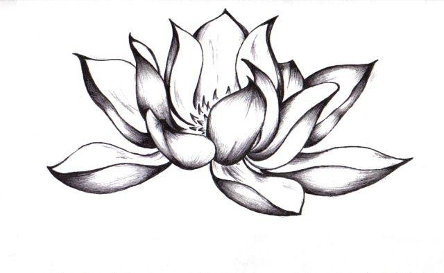640x394 japanese flowers drawings japanese lotus flower drawing japanese