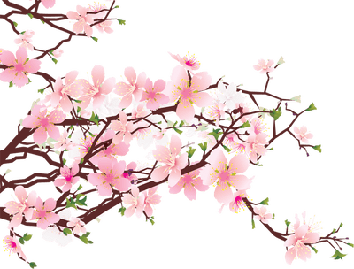 400x304 Japanese Flowers On Tree Transparent Png