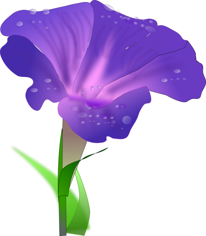 655x750 Japanese Morning Glory Drawing Flower Water Spinach Cc0