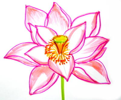 400x330 How To Draw A Lotus
