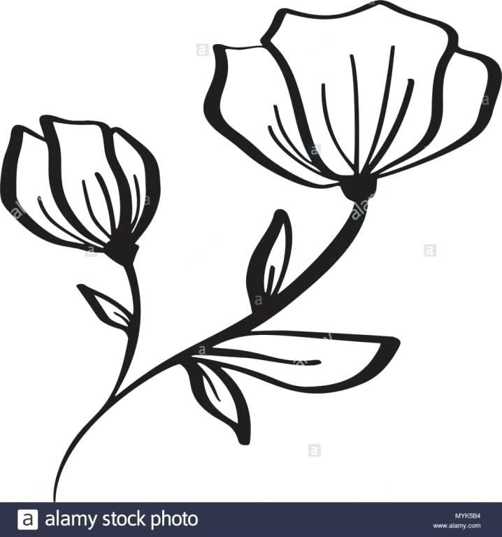 718x768 Flower Drawings Simple