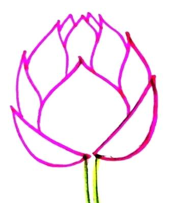334x400 Lotus Drawing