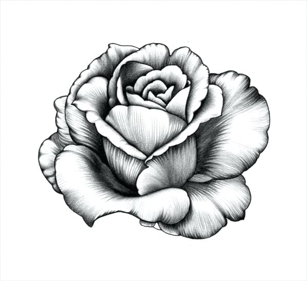 599x547 Sketch Of A Flower Skull With Flower Drawing Flower Sketch Images