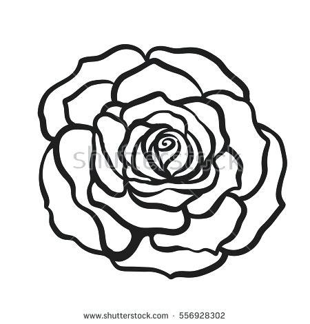 450x470 A Drawn Rose Drawn Rose Images