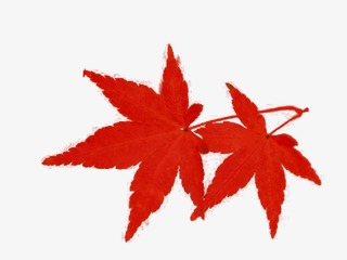 320x240 hand painted poster red maple leaf, red, maple leaf, poster png