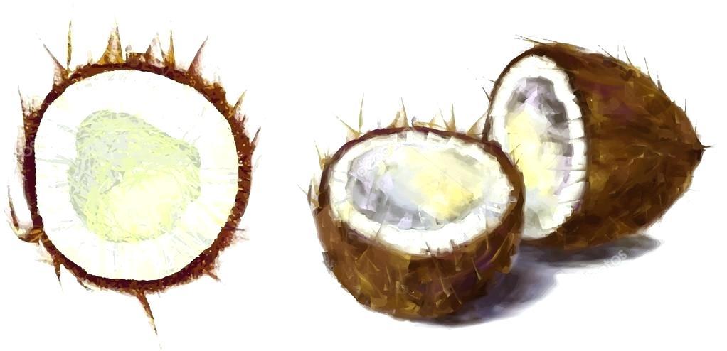 1022x494 drawing coconut coconut coconut tree drawing colour
