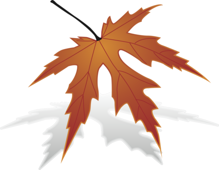 436x340 Huge Collection Of 'japanese Maple Leaf Drawing' Download More
