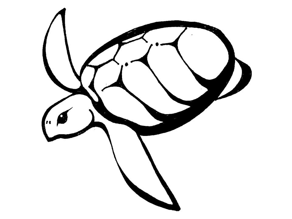 960x720 Turtle Drawing Stencil For Free Download