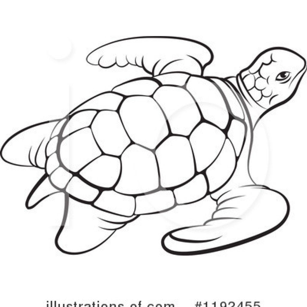 1024x1024 Latest Clip Art Turtle Holiday Fond