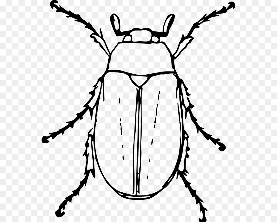 900x720 Bug Drawing Japanese Beetle For Free Download