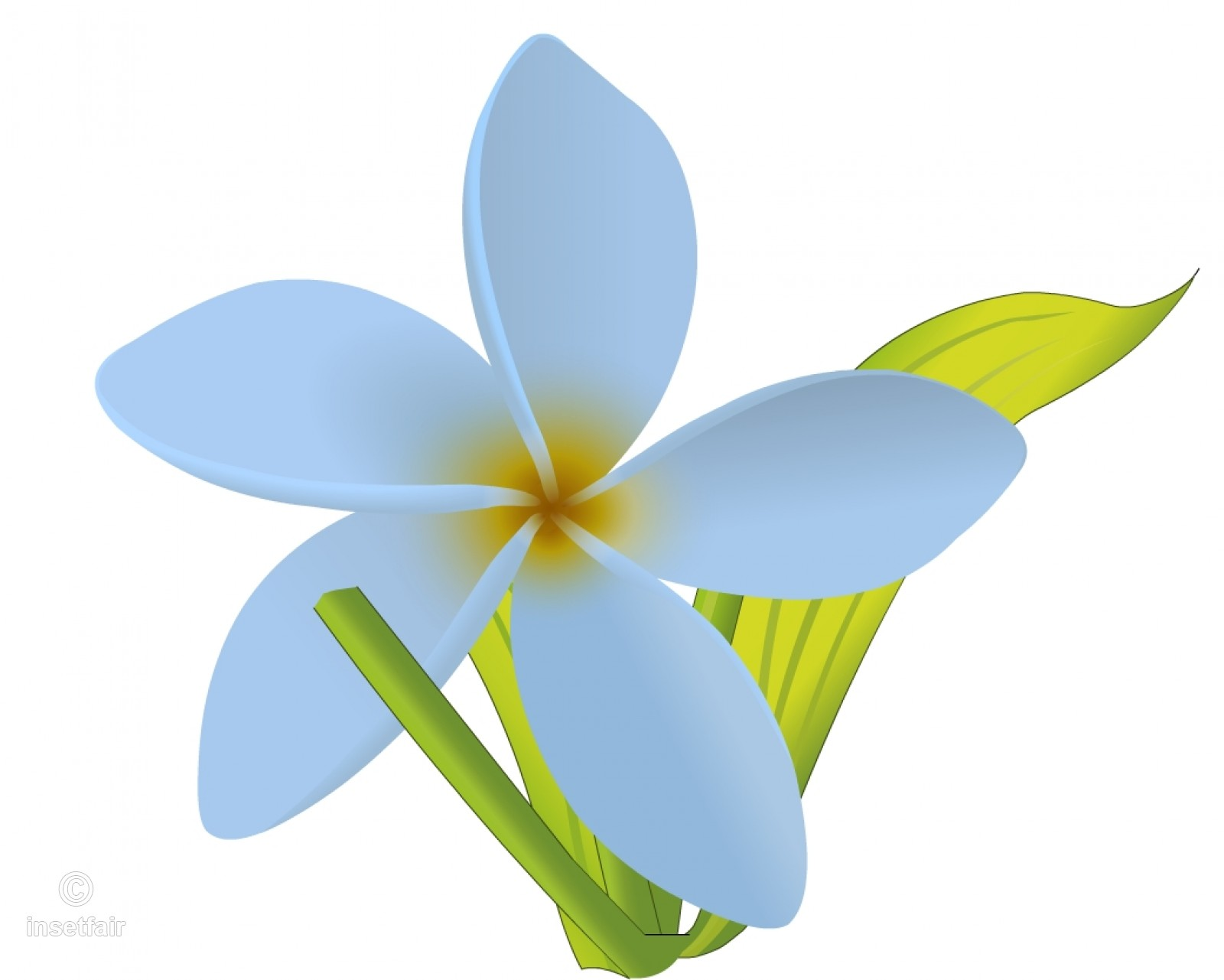 1600x1281 White Jasmine Flower Vector Drawing With Adobe Flash