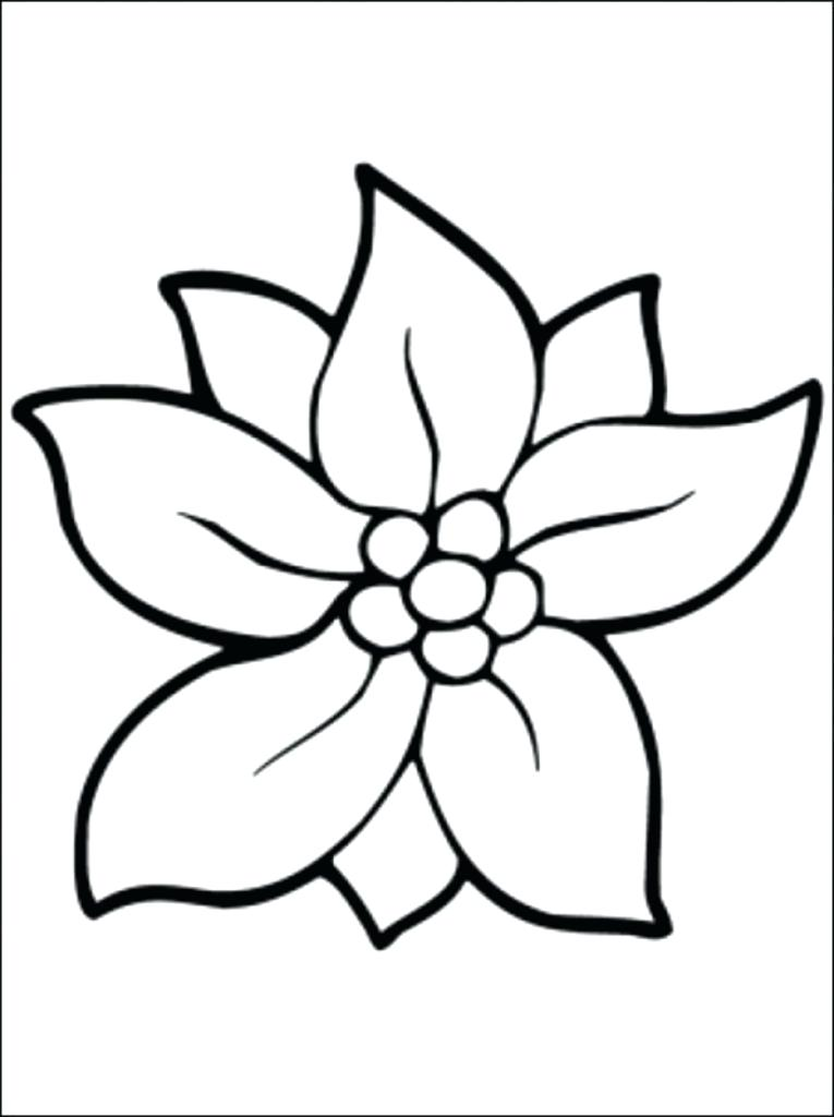 Jasmine Flower Drawing | Free download on ClipArtMag
