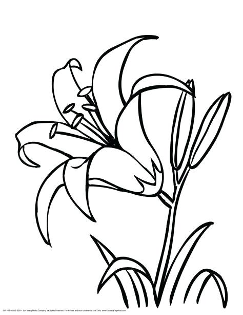 474x613 Cool Drawing Outlines At Free For Personal Use Flower Outline