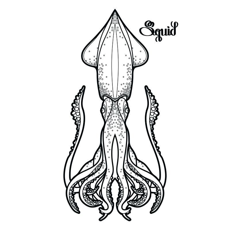800x800 squid drawing watercolor squid jellyfish cartoon squid drawing