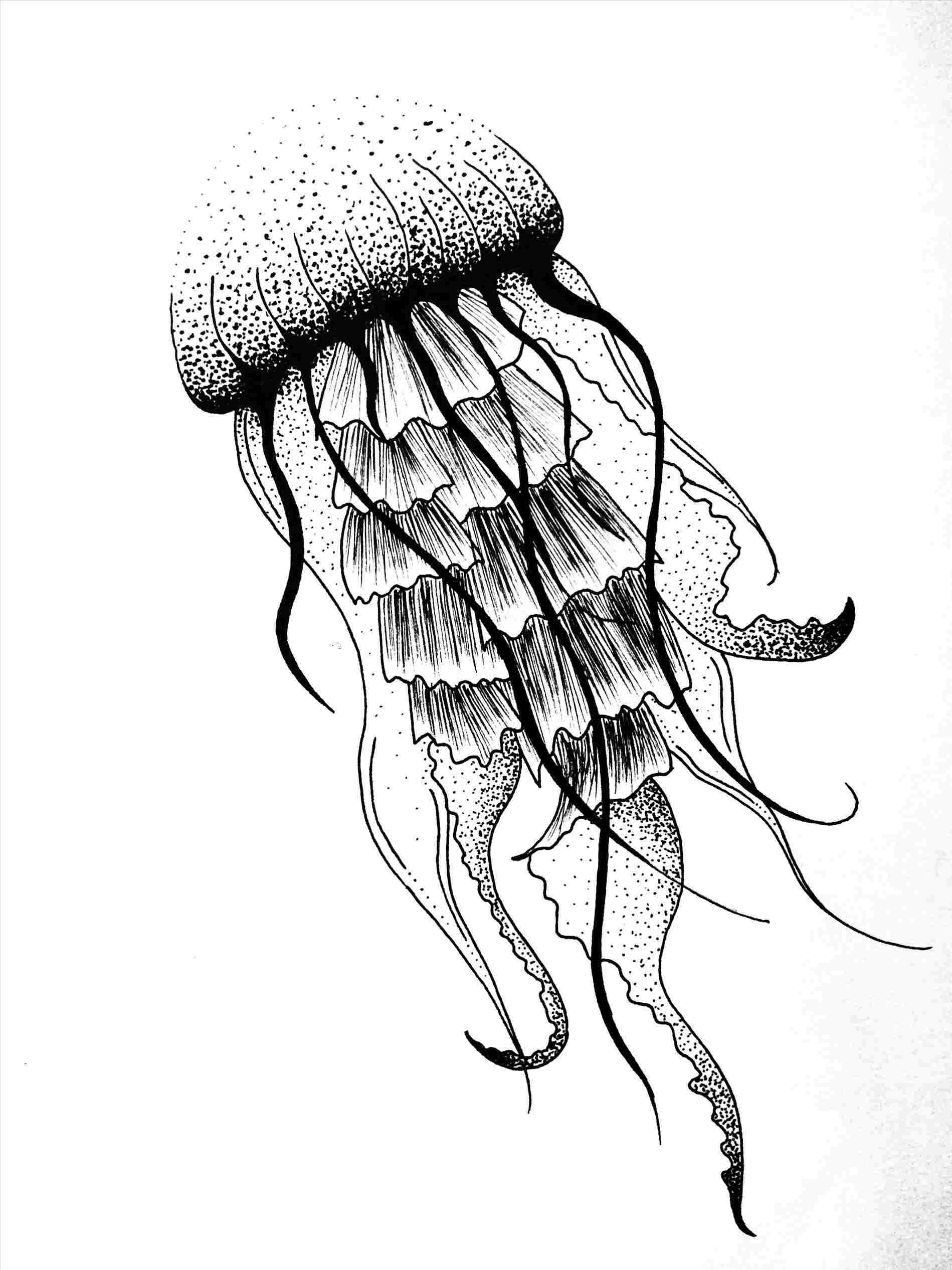 Jellyfish Drawing For Kids | Free download on ClipArtMag