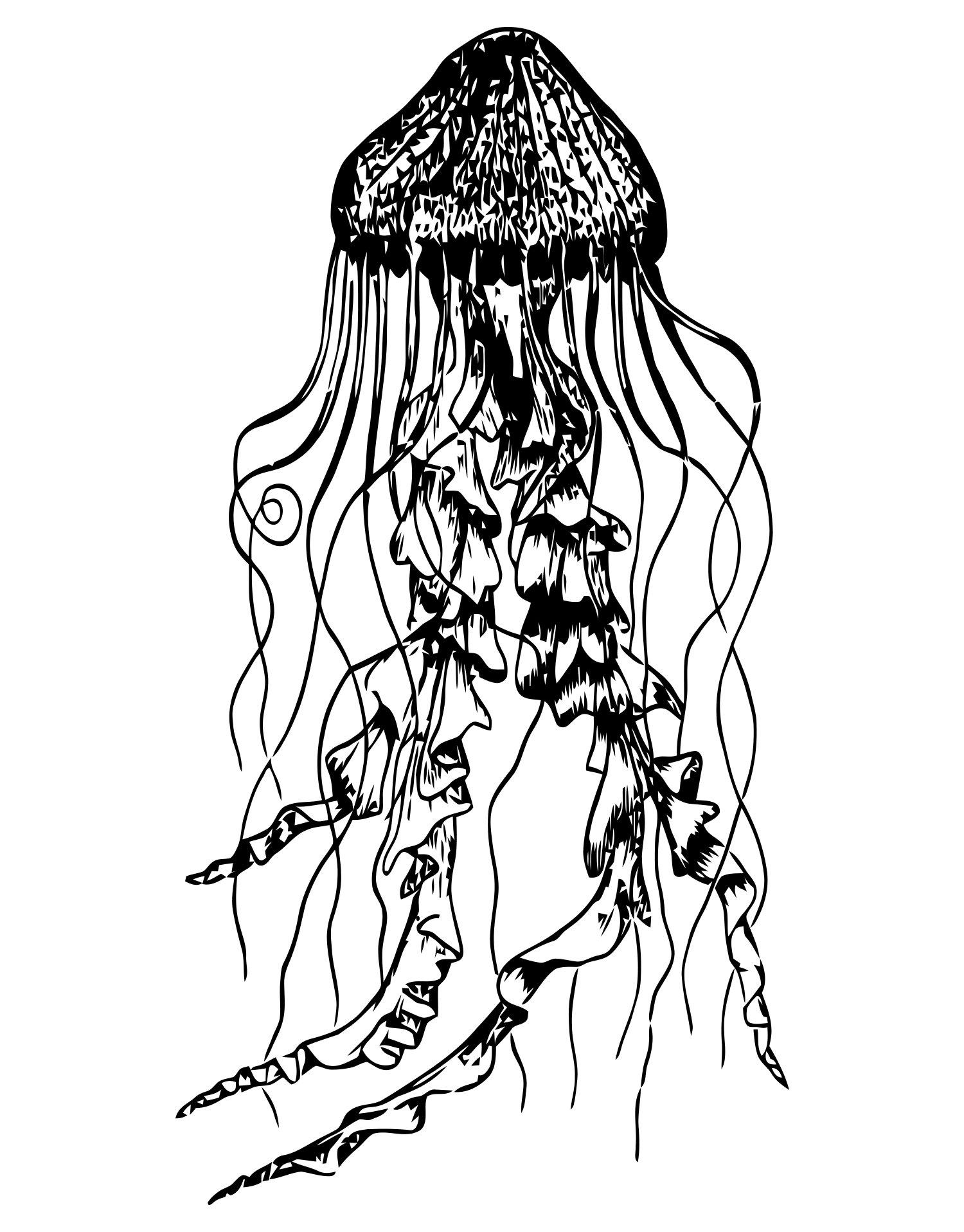 Jellyfish Line Drawing