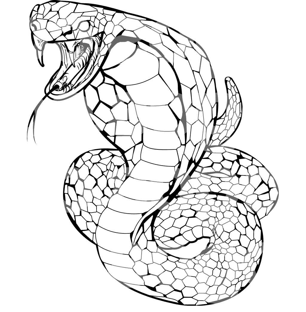 1024x1044 anaconda snake clipart clipart