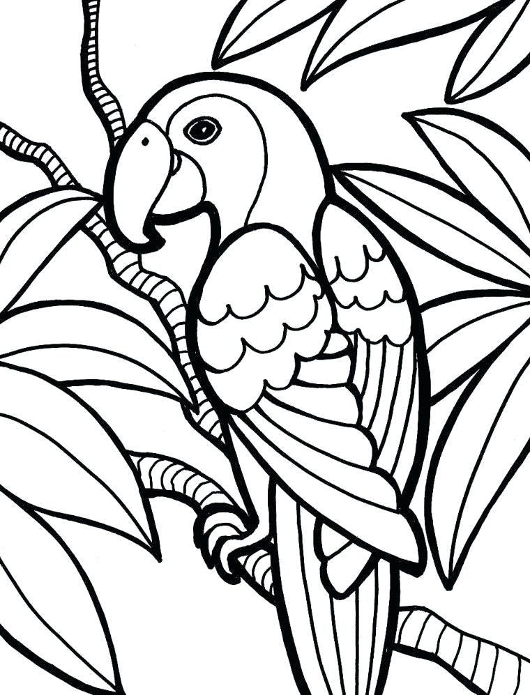 760x997 jungle coloring sheets jungle coloring pages jungle animals