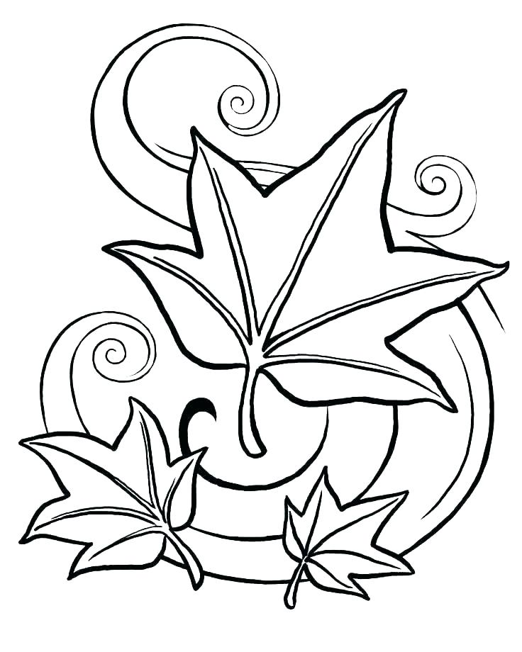 736x920 rainforest plants coloring pages related post rainforest plants