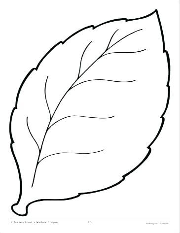 image about Jungle Leaf Template Printable named Jungle Leaf Drawing No cost obtain excellent Jungle Leaf Drawing