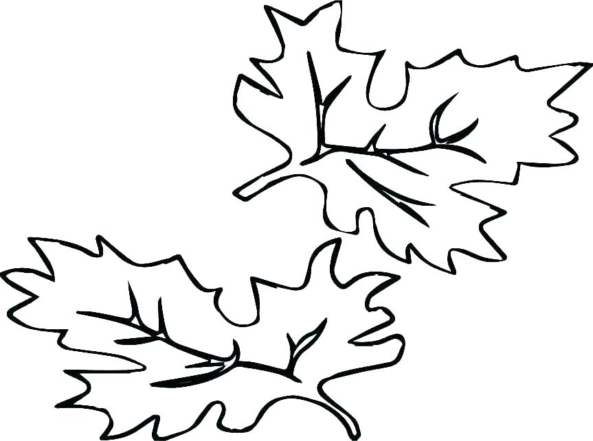 Jungle Leaf Drawing   Free download on ClipArtMag