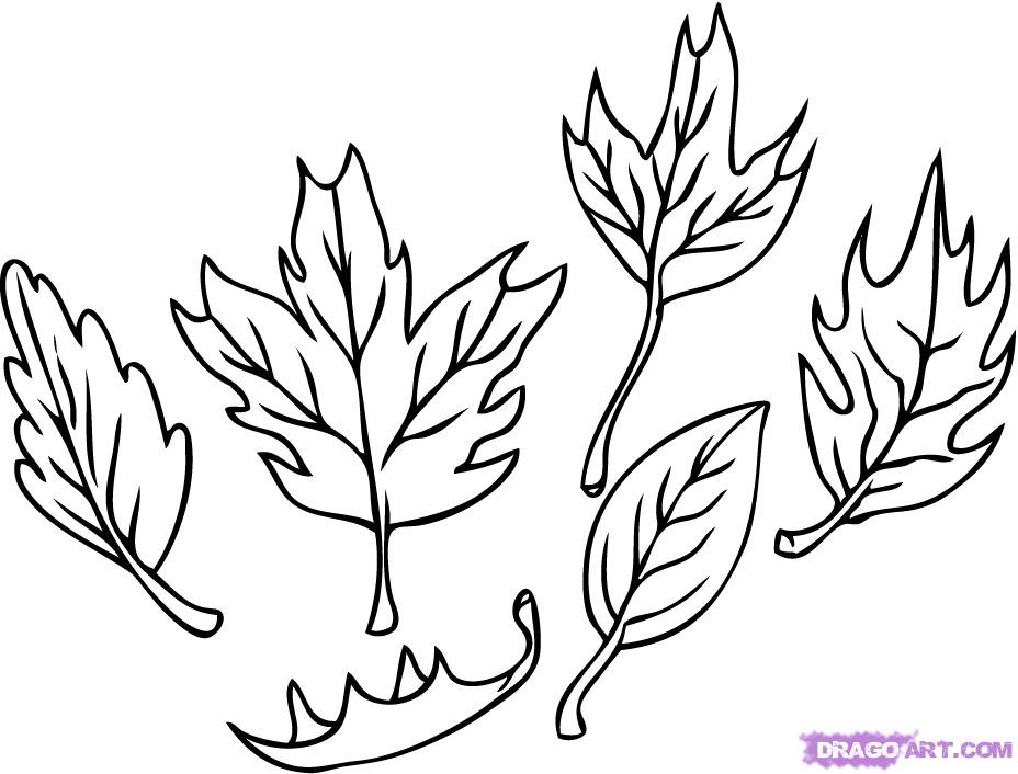 Jungle Leaves Drawing