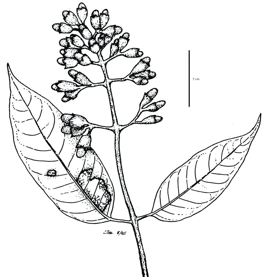 Jungle Leaves Drawing | Free download on ClipArtMag