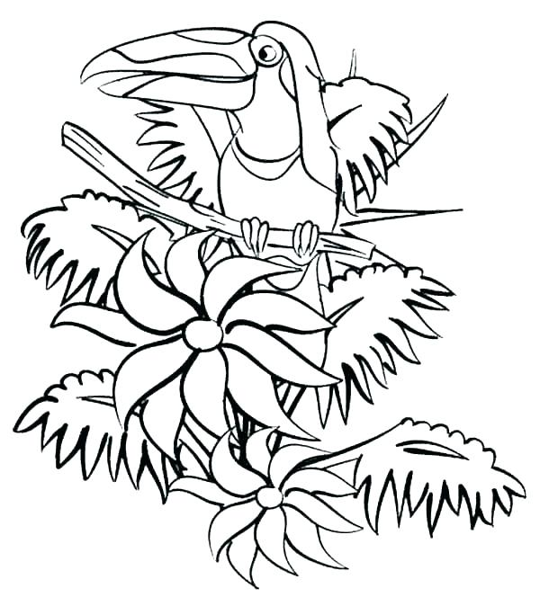 600x674 jungle colouring sheets jungle jungle colouring sheets jungle