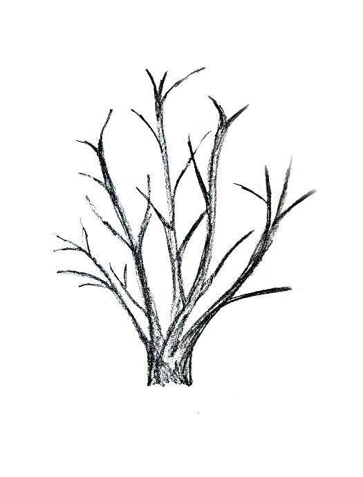 525x690 drawing branches image drawing tree branches images