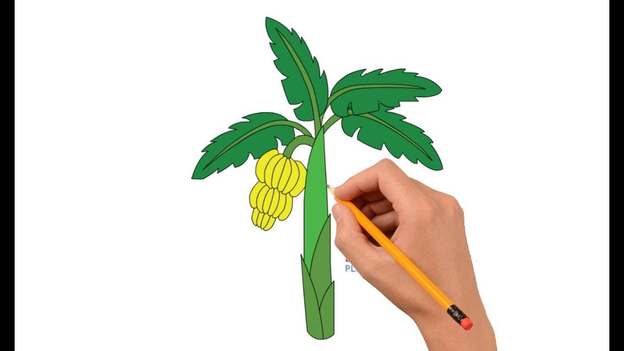 1280x720 How To Draw A Banana Tree Step