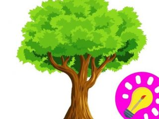 320x240 Save Trees Pictures For Kids How To Draw Save Trees And Save