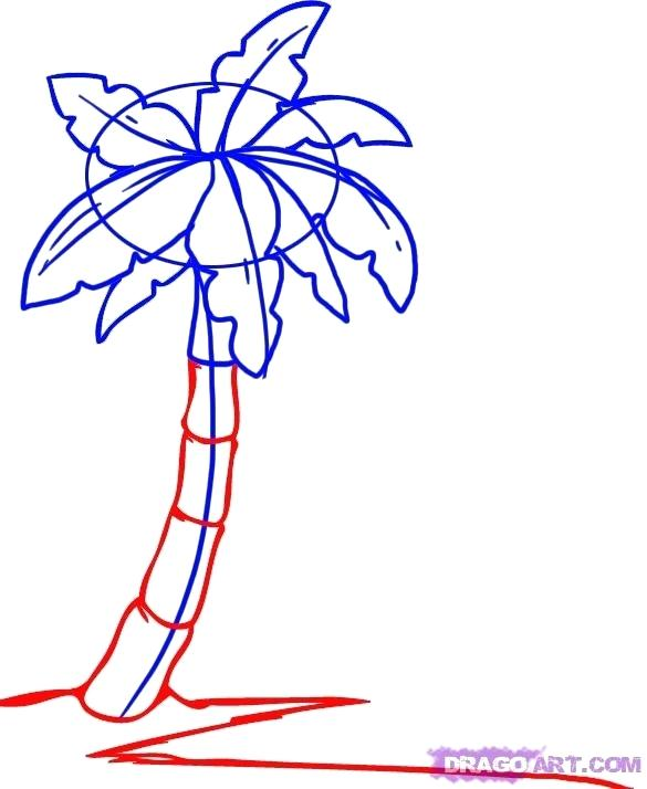 585x714 Drawing A Palm Tree An Easy Way Drawing Palm For Kids Drawing