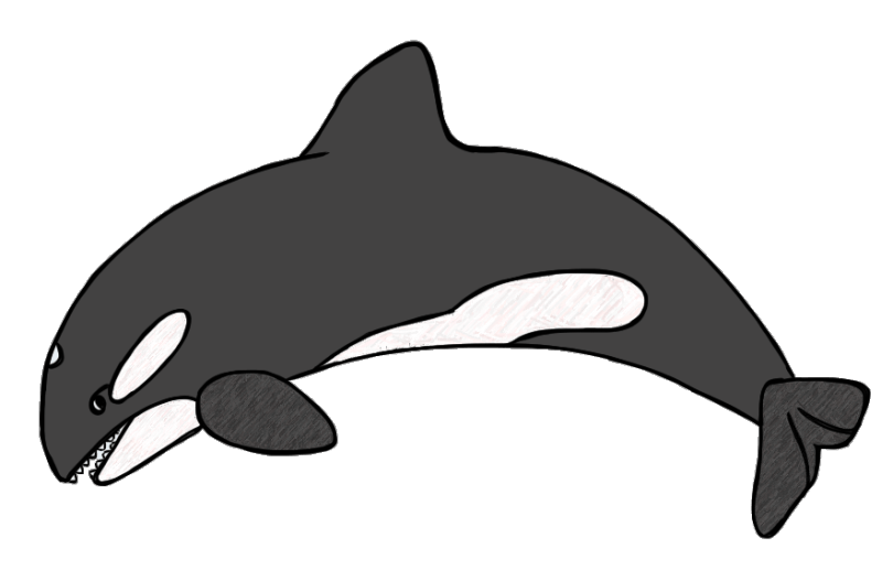 Killer Whale Drawing For Kids