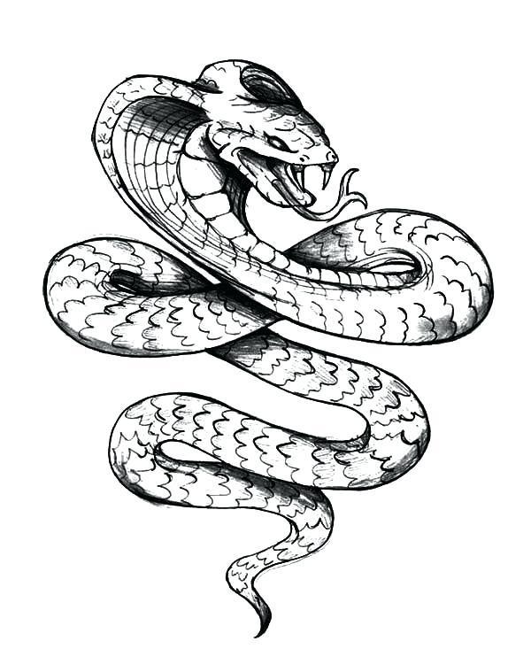 600x759 cobra drawing cobra cobra drawing step
