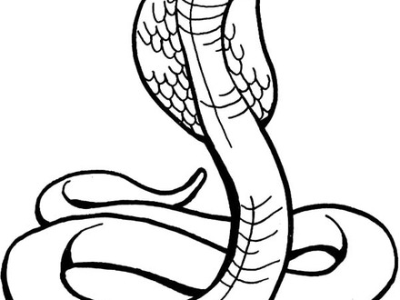 King Cobra Snake Drawing