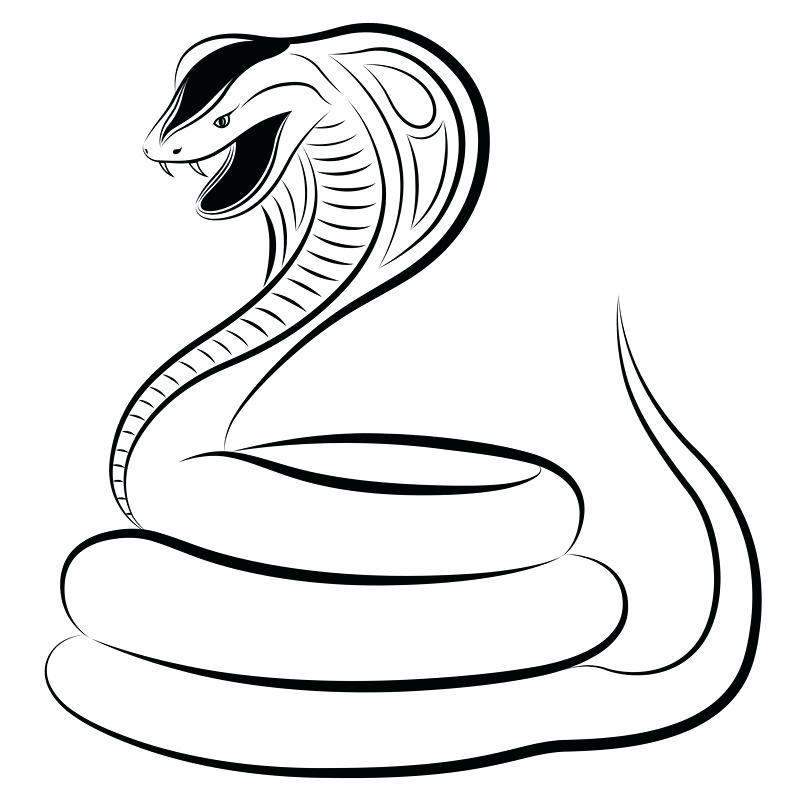 800x800 how to draw a cobra drawn cobra snake hissing cobra driver draw