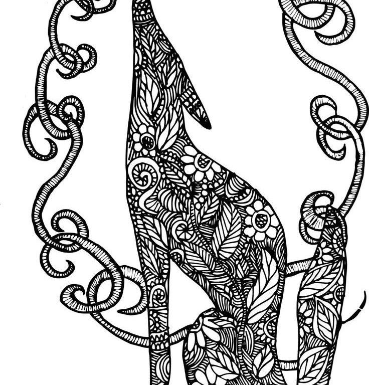 736x768 king cobra coloring pages excellent how to draw and anaconda