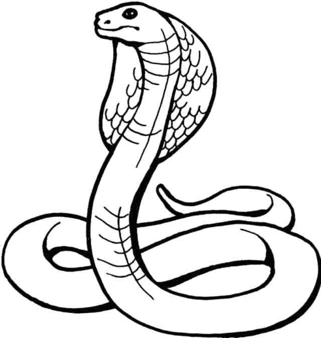 640x673 cobra snake drawing how to draw a snake cobra king cobra snake