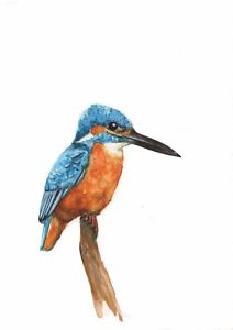 Kingfisher Bird Drawing | Free download on ClipArtMag