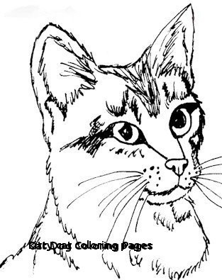 313x395 How To Draw A Kitten Face Unique Kitty Cat Coloring Pages Cat Dog