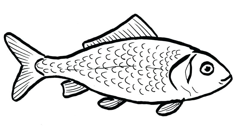 800x448 outline of a fish fish outline jumping fish outline drawing
